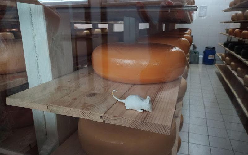 syr-vino-i-lavandovoe-pole