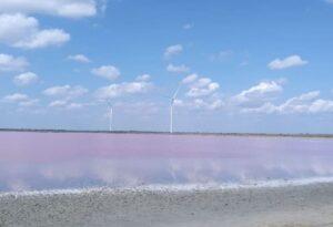 тур на Розовое озеро