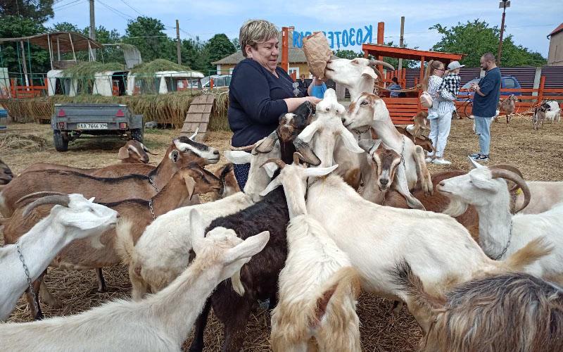evropejskaya-syrovarnya-kozy-i-matrosy